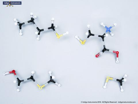 Thiol Chemistry Models